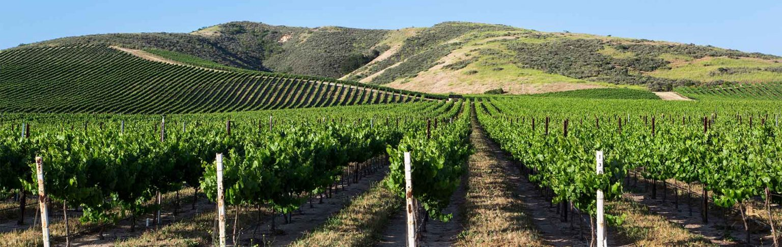 Live the Moments with the Top 10 Mornington Peninsula Wineries